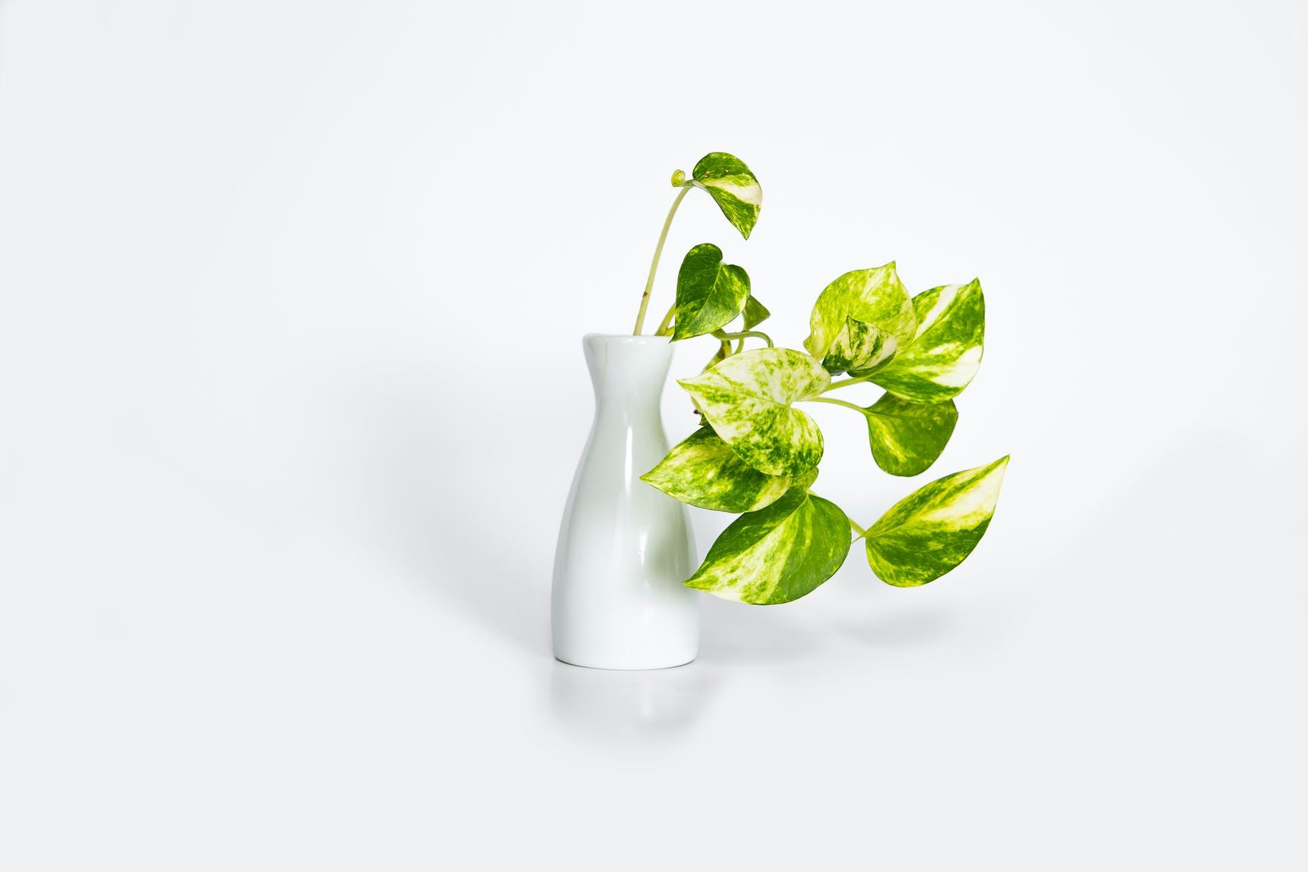 BEST INDOOR PLANTS WITH MINIMAL MAINTENANCE