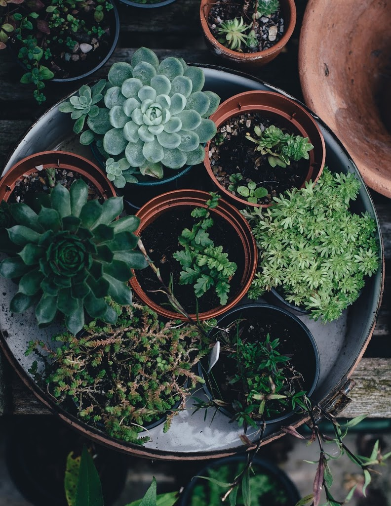 Gardening-a-productive-way