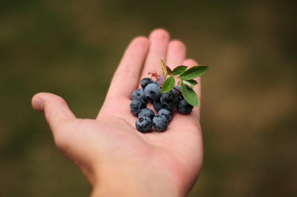 Blue-berries-increases-immunity